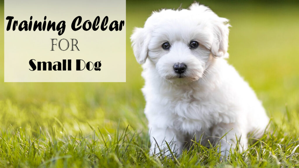 Best Training Collar for Small Dog