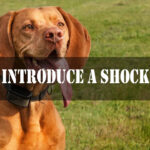 How to Introduce a Shock Collar to a Dog